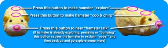 hamsterINSTRUCT