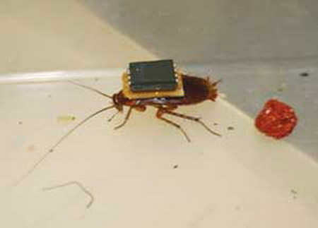 1267081722_robot_cockroach_1